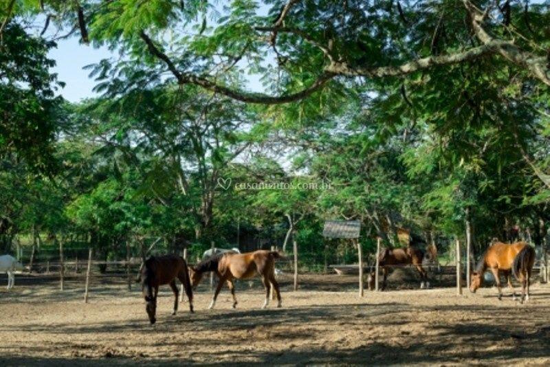 Equitação e cavalgadas