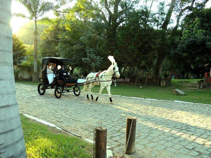 Carruagem com cavalo branco de Fazenda Boa Esperança