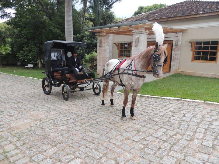 Carruagem com cavalo Apaloosa