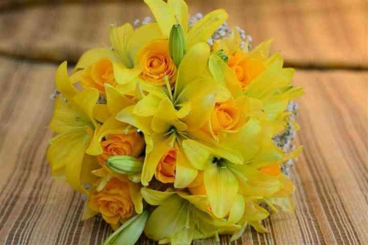 Avenca Flores