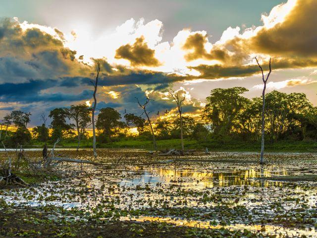 Lua de mel no Pantanal: amor em meio à natureza