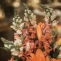 O casamento de Bianca A. e Flor Brasileira 62