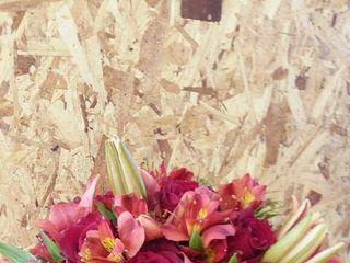 Acácia Flores Floricultura 4
