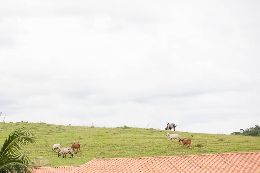 Fazenda Vale dos Eucaliptos 1