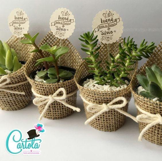 Cactus e suculentas de lembrancinha for Curso cactus y suculentas