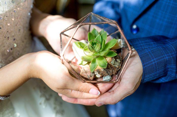 Uma planta para ter em casa: qual você escolhe? 1