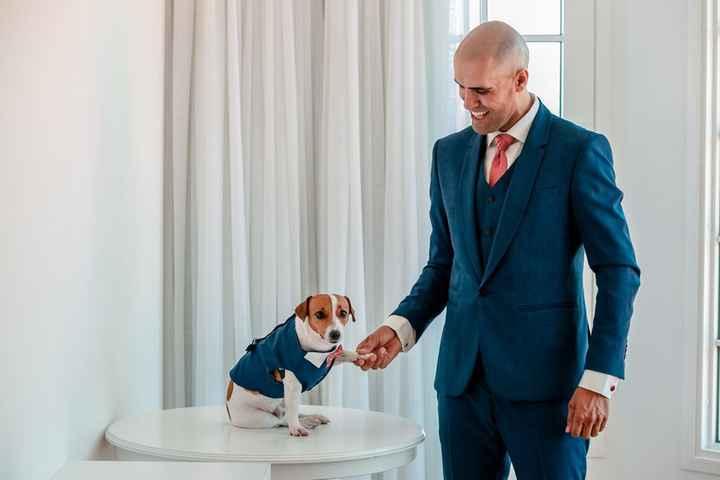 Qual hashtag você usa para a roupa desse dog? - 1