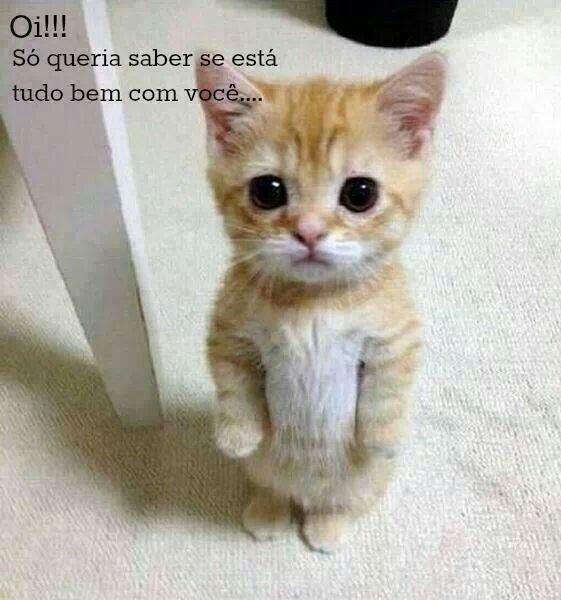 Conhecido Boa noite de gatinho ^..^ OY69