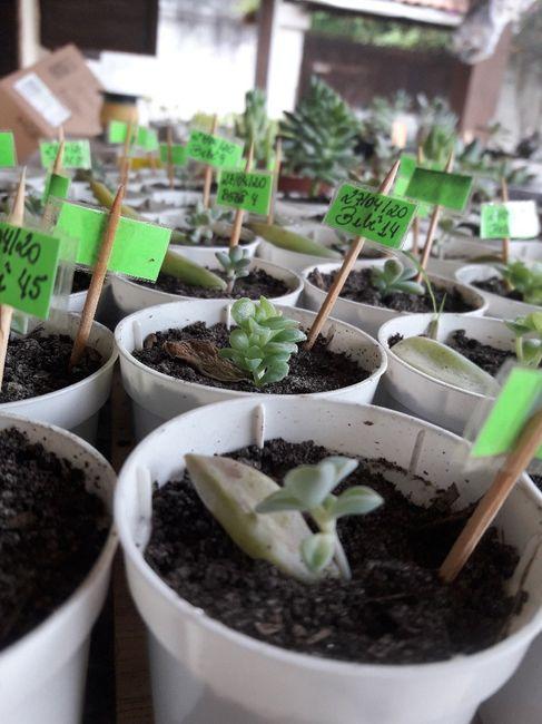 Cultivo de suculentas #parte5 🌱 6