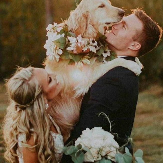 Inspirações de pets no casamento. Fofura infinita. 🐾🤍🐶🐱 1