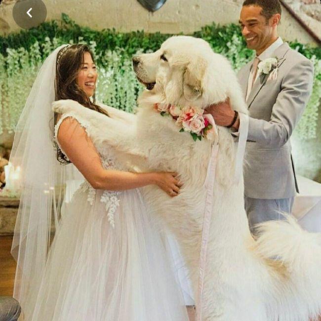 Inspirações de pets no casamento. Fofura infinita. 🐾🤍🐶🐱 4