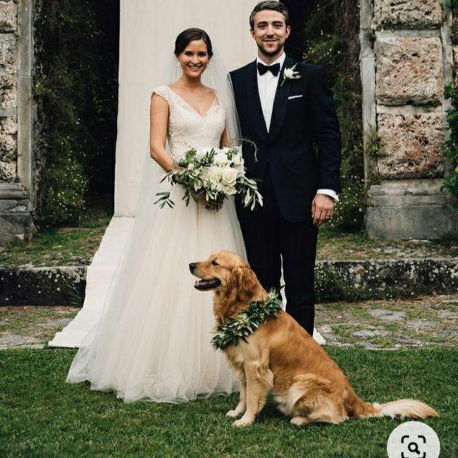Inspirações de pets no casamento. Fofura infinita. 🐾🤍🐶🐱 7