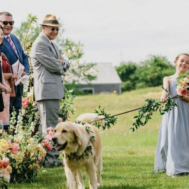 Inspirações de pets no casamento. Fofura infinita. 🐾🤍🐶🐱 8