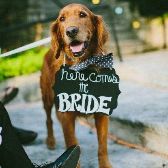 Inspirações de pets no casamento. Fofura infinita. 🐾🤍🐶🐱 11