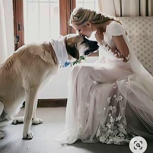Inspirações de pets no casamento. Fofura infinita. 🐾🤍🐶🐱 12