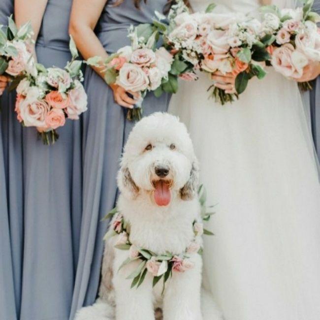 Inspirações de pets no casamento. Fofura infinita. 🐾🤍🐶🐱 15