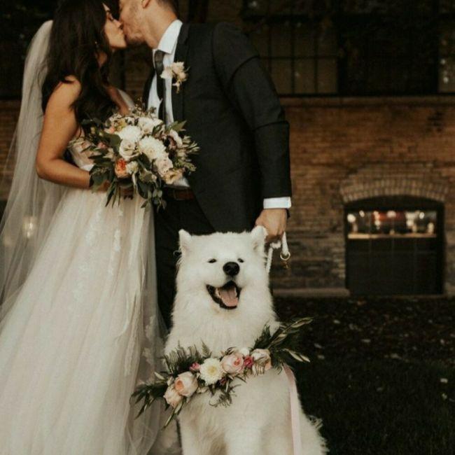 Inspirações de pets no casamento. Fofura infinita. 🐾🤍🐶🐱 16