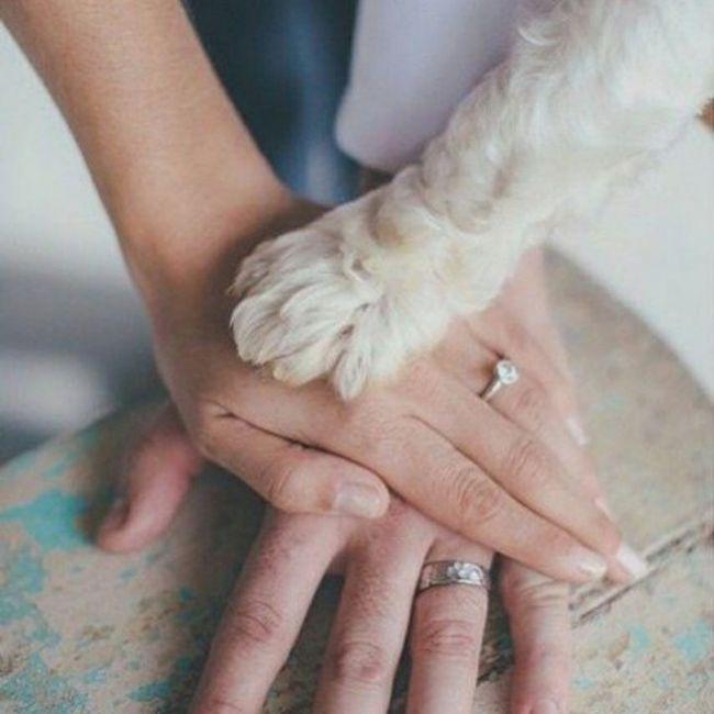 Inspirações de pets no casamento. Fofura infinita. 🐾🤍🐶🐱 17