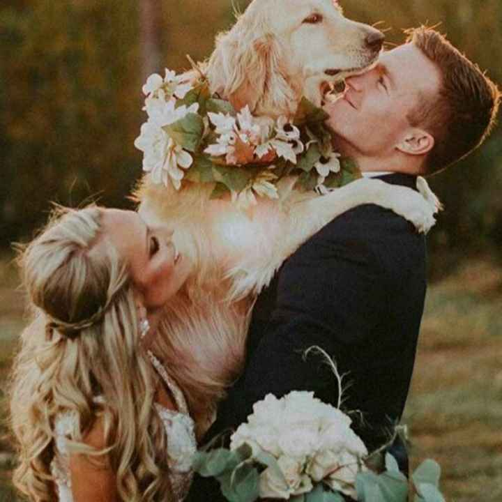 Inspirações de pets no casamento. Fofura infinita. 🐾🤍🐶🐱 - 1