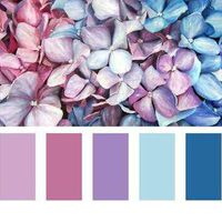 Qual será a cor da decoração? - 1