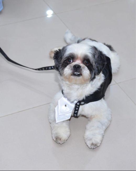Pets no Casamento - 1