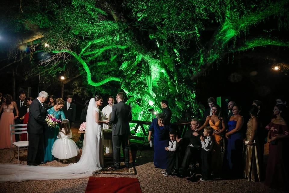 Cerimônia na figueira 350 anos