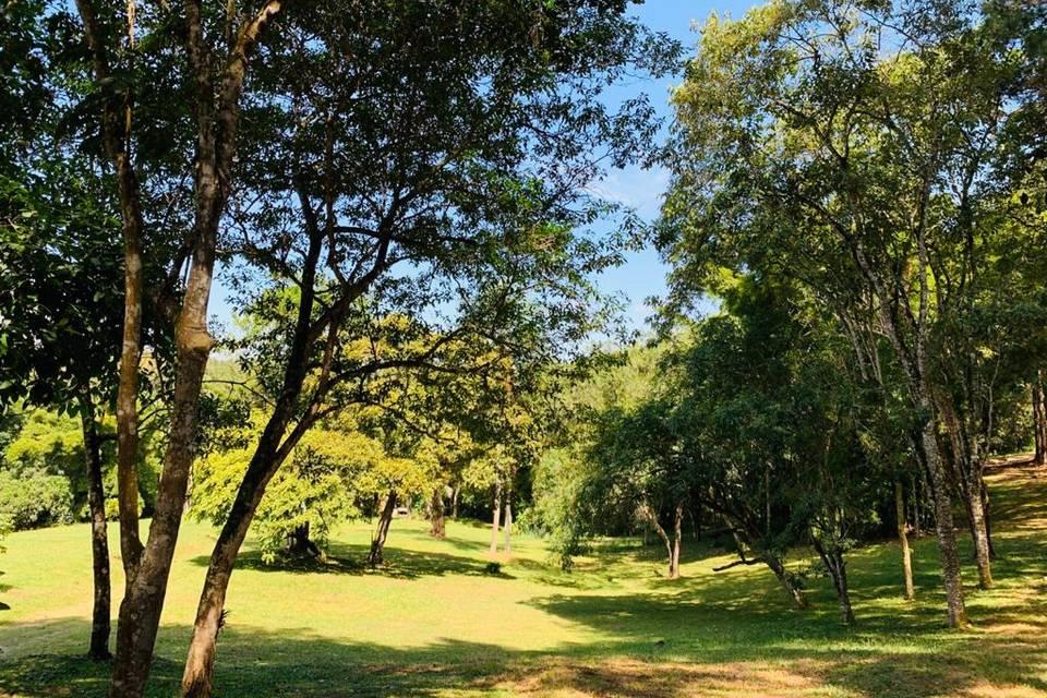 Bosque lateral