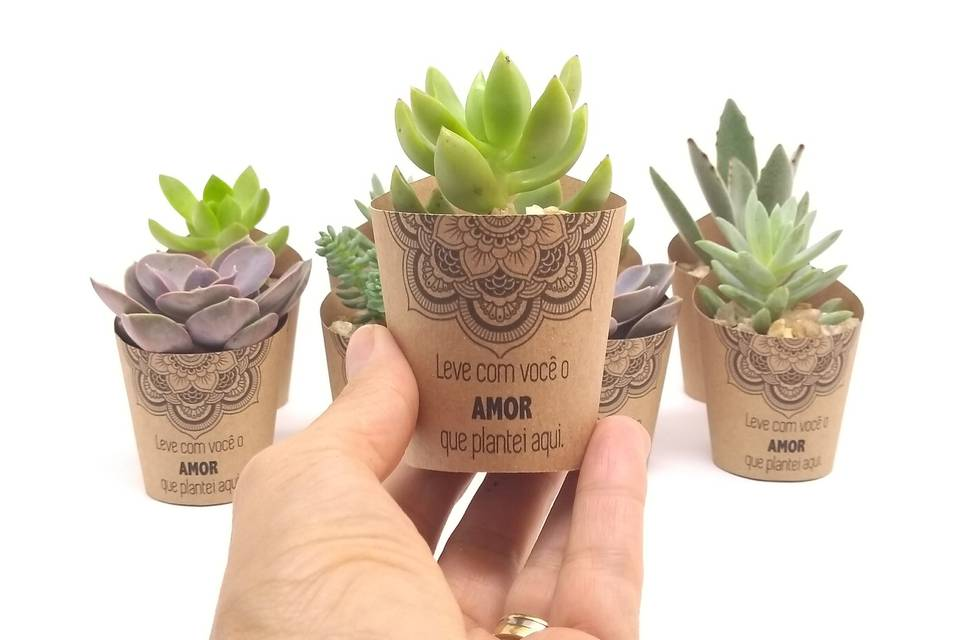 Mimo Verde Party Favors